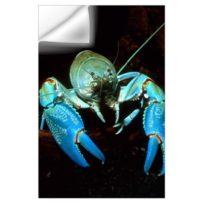 Freshwater crayfish Wall Decal