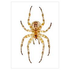 Garden spider, light micrograph Poster