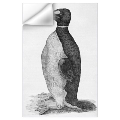 Great Auk (Pinguinus impennis), engraving Wall Decal