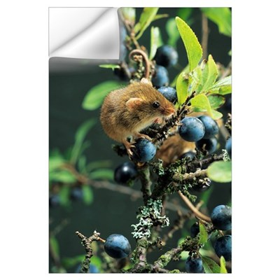 Harvest mouse Wall Decal