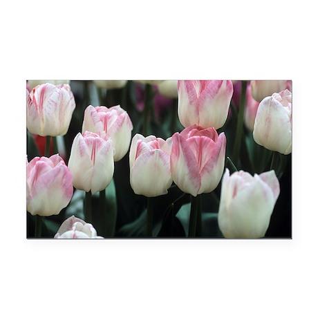 Tulipa 'Meissner Porzellan' flowers - Car Magnet