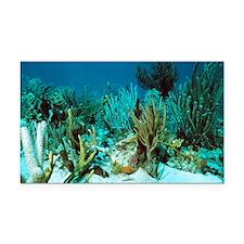 Corals - Car Magnet
