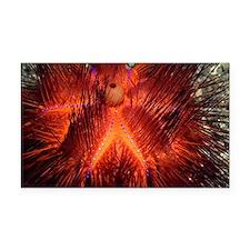 False fire urchin - Car Magnet