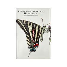 Zebra Swallowtail Butterfly Rectangle Magnet