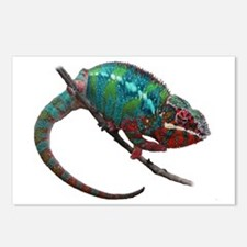 Cute Chameleon Postcards (Package of 8)