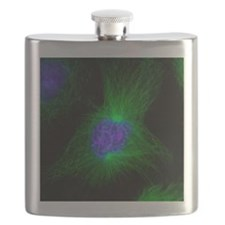 Cell division, fluorescent micrograph - Flask