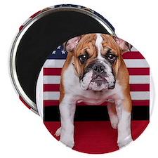 "All American Bulldog 2.25"" Magnet (100 pack)"