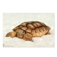 Tortoise Time! Postcards (Package of 8)