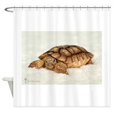 Tortoise Time! Shower Curtain