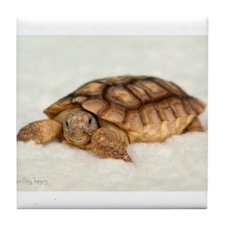 Tortoise Time! Tile Coaster
