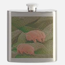 Water bears, SEM - Flask