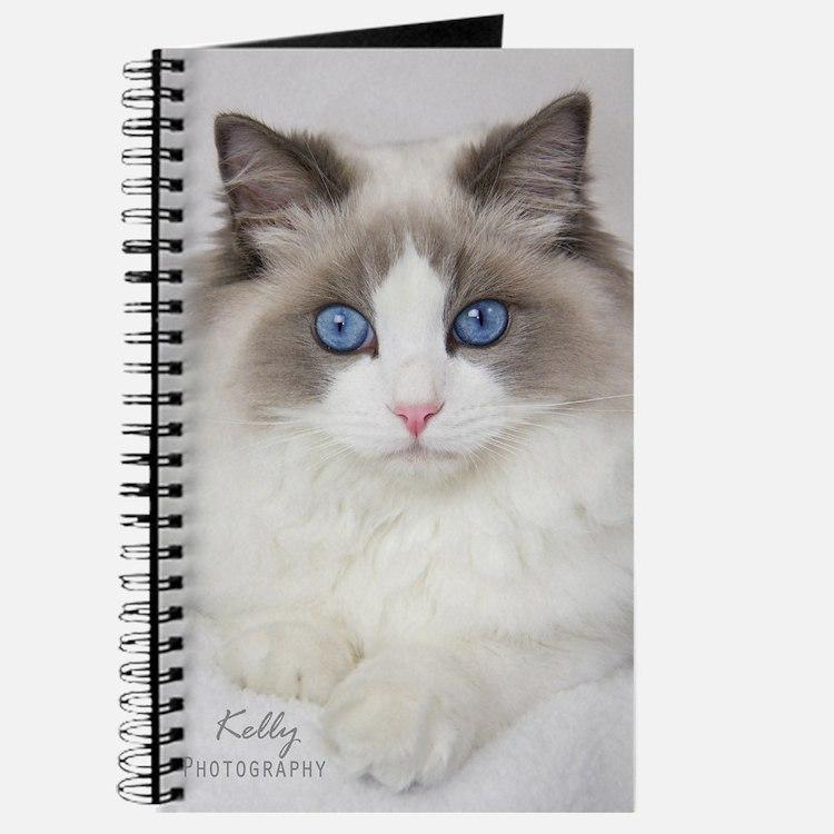 Ragdoll Kitten Journal