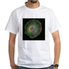 3t3 culture cell - Shirt
