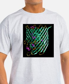 Outer membrane receptor protein molecule - T-Shirt