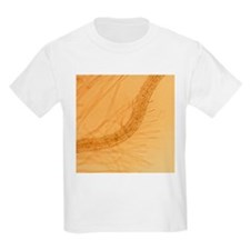Thale cress root with root hairs - T-Shirt