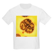 Radiation resistant bacteria, SEM - T-Shirt