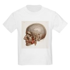 Head vascular anatomy, historical artwork - T-Shirt