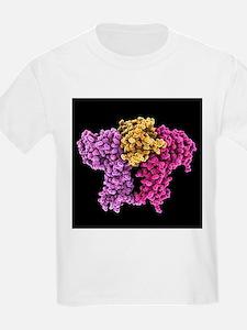 Erythropoietin bound to receptors - T-Shirt