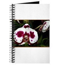 Orchid! Floral photo! Journal