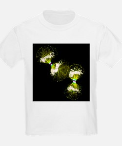 Cell division - T-Shirt