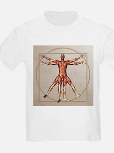 Male musculature, artwork - T-Shirt