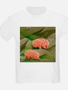 Water bears, SEM - T-Shirt