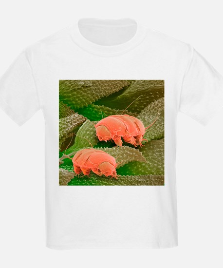 Water bears, SEM - T-Shirt