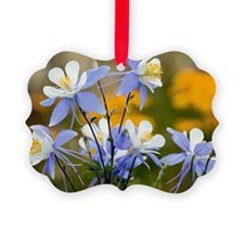 Blue Columbine (Aquilegia coerulea) - Ornament