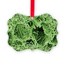 Lily leaf, SEM - Ornament