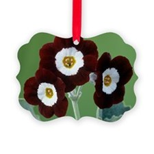 Show auricula 'Old Red Elvet' flowers - Ornament