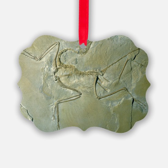 Archaeopteryx fossil - Ornament