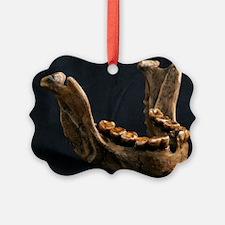 Homo floresiensis mandible - Ornament