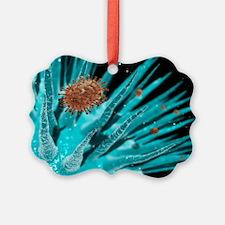 Flu viruses - Ornament