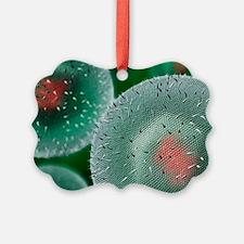 Herpes virus - Ornament