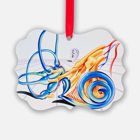 Artwork of inner ear - Ornament