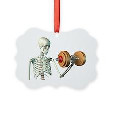 Bone strength - Ornament