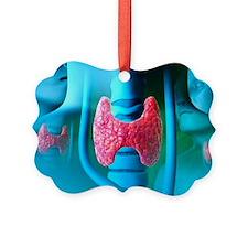 Thyroid gland - Ornament