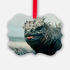 Marine iguana - Ornament