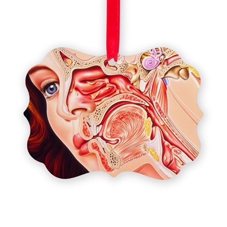 Artwork of ear, nose - Picture Ornament