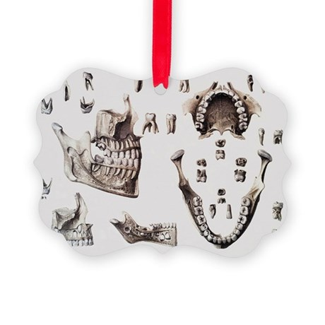 Dental anatomy - Picture Ornament