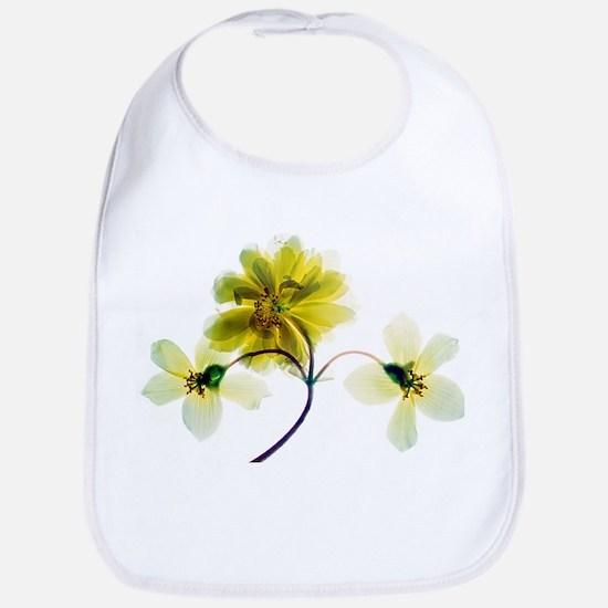 Begonia sp. 'Apricot Cascade' flowers - Bib