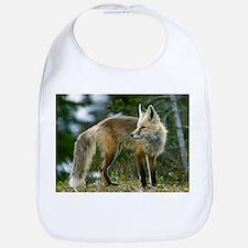 Cascade red fox - Bib