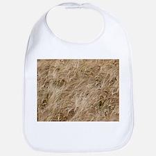 Barley (Hordeum vulgare) - Bib