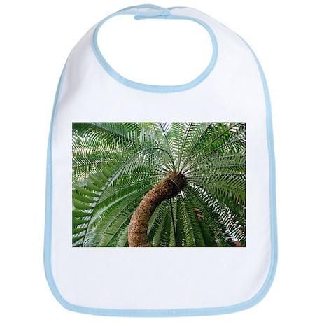 Bread tree (Encephalartos altensteinii) - Bib