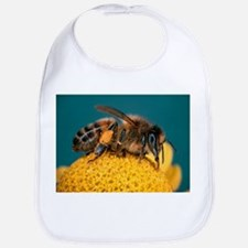 Honey bee on flower - Bib