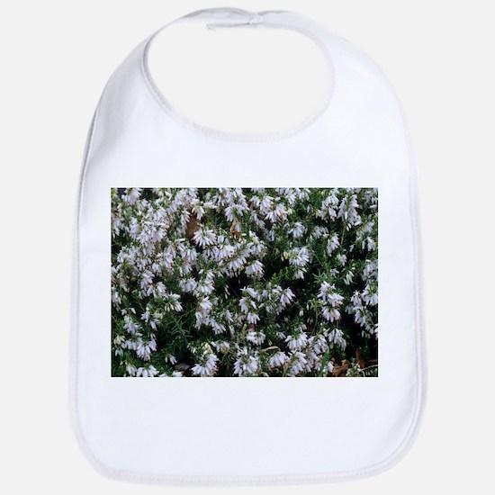 Heather 'Springwood White' flowers - Bib