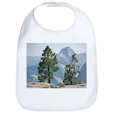 Jeffrey pine and whitebark pine trees - Bib