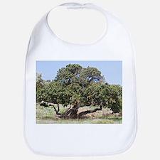 Mastic tree (Pistacia lentiscus var.chia) - Bib