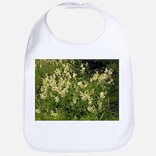 Meadowsweet (Filipendula ulmaria) - Bib