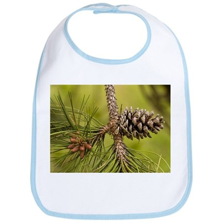 Maritime pine (Pinus pinaster) - Bib
